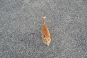 奥武島 猫
