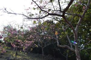 21八重瀬公園_遊び場_桜
