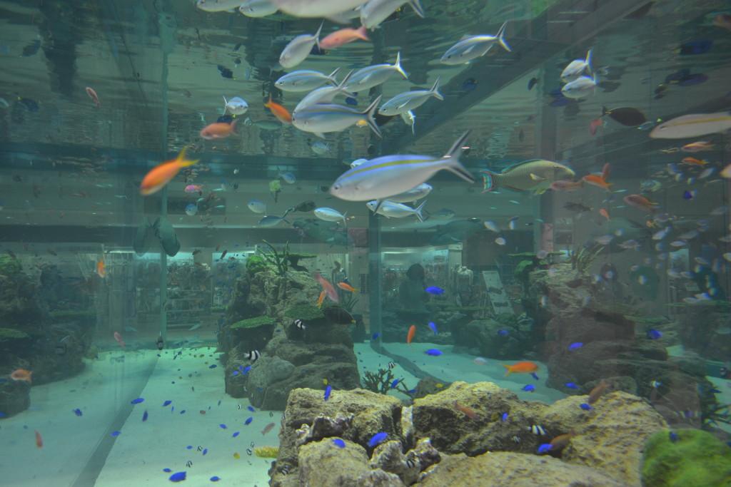 240_イオンモール沖縄ライカム 1階 魚