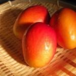 沖縄でマンゴーが激安で買える場所