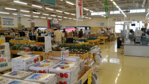 020_沖縄_マンゴー_JA-1